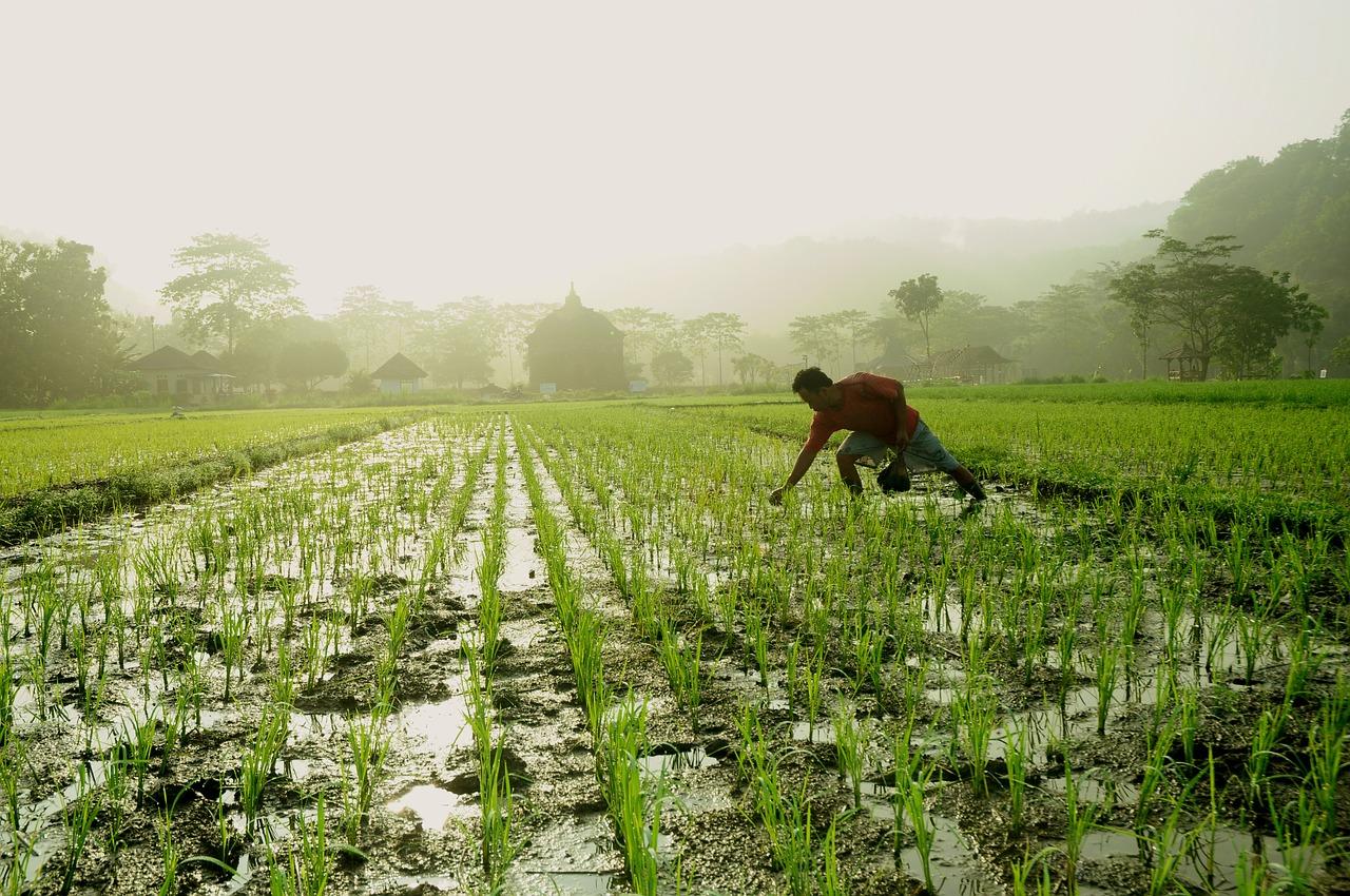 Hari Tani Nasional, Petani & Kemerdekaan Atas Tanah Produksi